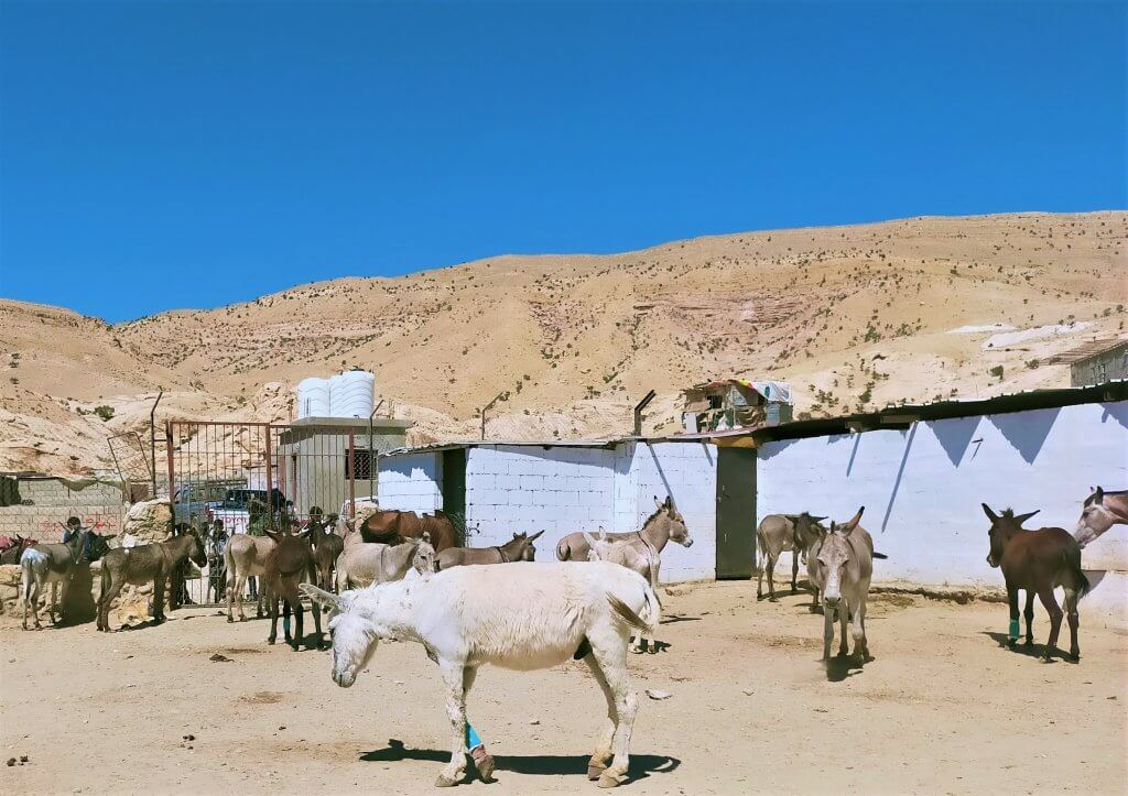 Donkeys and horses explore the clinic grounds.