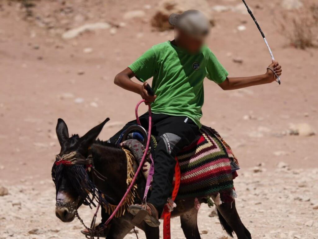 This person is preparing to thrash the donkey he's riding.