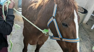 Injured Horse Is Healing and Retired!