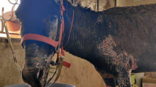 How Could Anyone Do This to a Donkey?