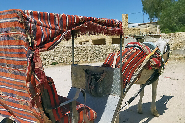 Horses like this spend long, grueling days carting tourists around Petra, without rest or a healthy meal.